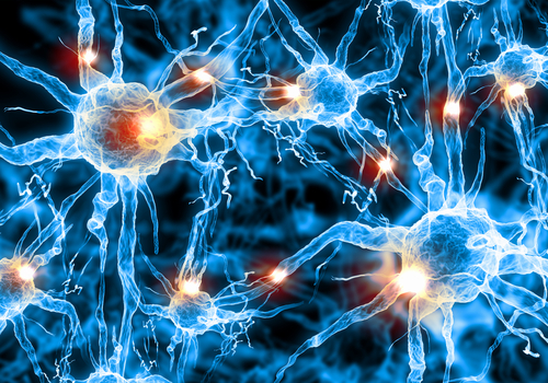 Study on Neurons' Function Provide Insight on Alzheimer's, Other Brain Diseases