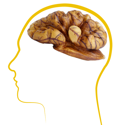 Walnuts Proven To Be A Crucial Factor Against Alzheimer's Disease