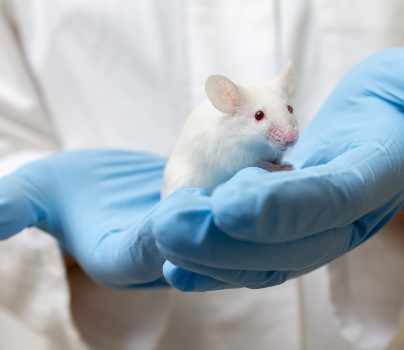 mouse study of Alzheimer's