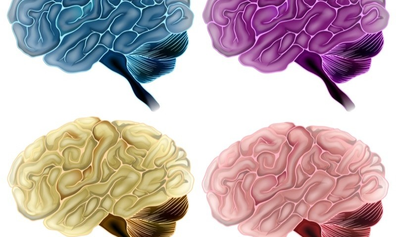 Brain Region Crucial to Memory and Cognition Is First to Exhibit Buildup of Alzheimer-linked Proteins, Study Finds