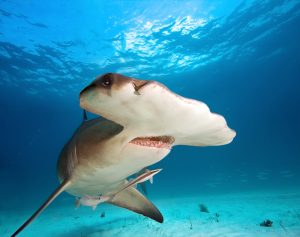 Shark Meat and Cartilage Contain Neurotoxins Linked to Alzheimer's, Study Warns