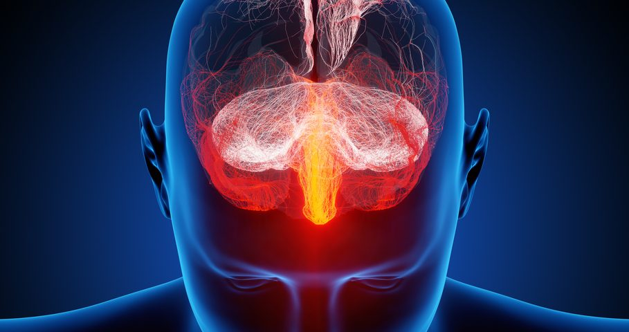 New Research Challenges Current Beliefs on How Nerve Cells Die in Alzheimer's Disease