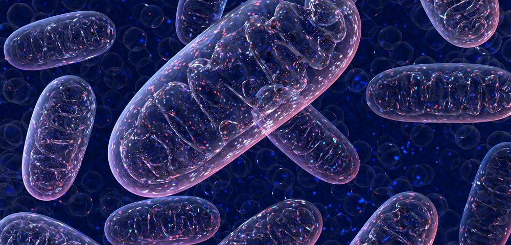 Abnormal Mitochondria May Signal Early Alzheimer's Disease Processes