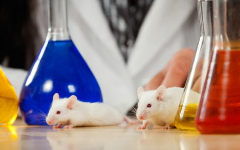 New Genetically Engineered Rat Model Can Aid Alzheimer's Research, Study Says