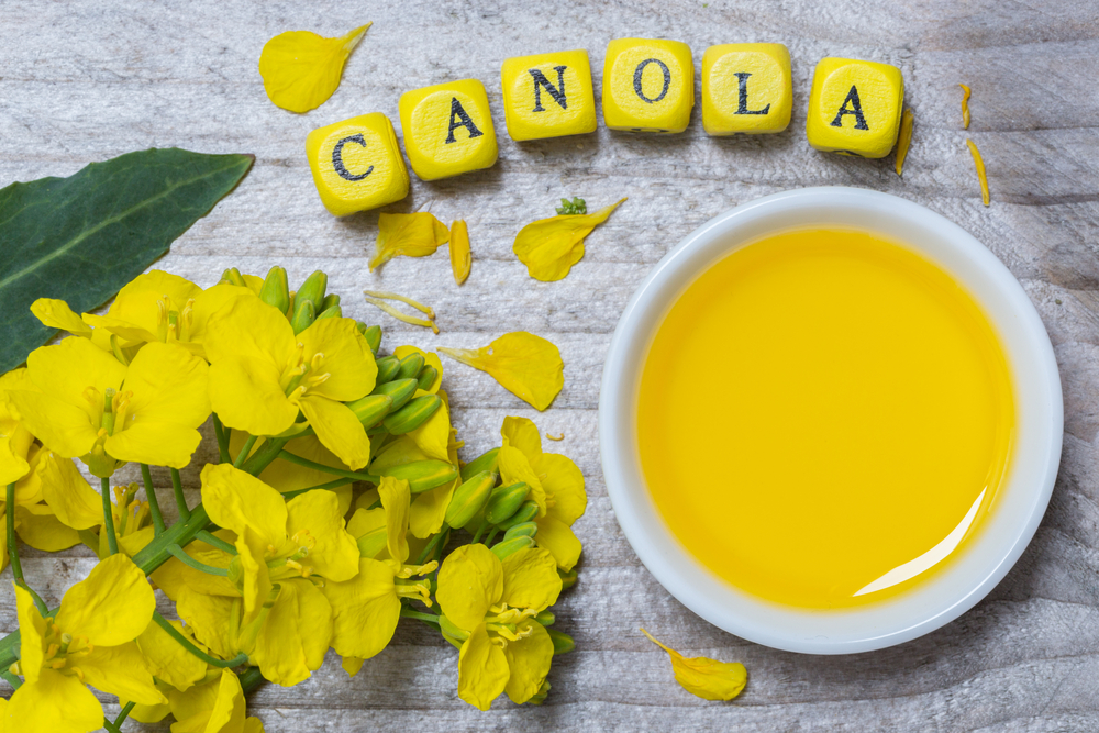 Canola oil and the brain