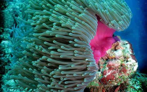Peptide Found in Sea Anemones Might Give Rise to Alzheimer's Treatment, Study Says