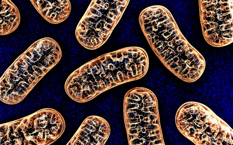 mouth bacteria, Alzheimer's risk