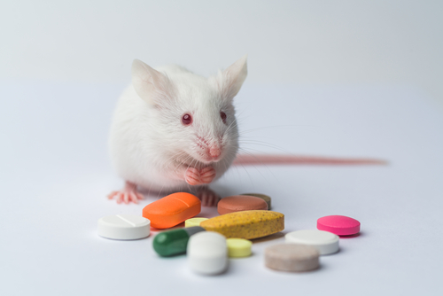 Oral Anticoagulant Dabigatran Prevented Memory Loss in Mouse Model of Alzheimer's, Study Shows