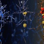 PI3Kδ inhibition Alzheimer's